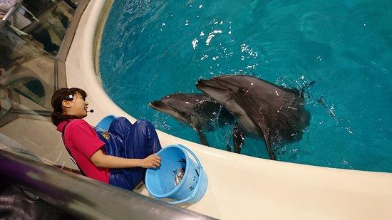 Aomori Asamushi Aquarium: DSC_1186_large.jpg