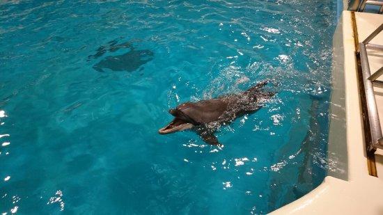 Aomori Asamushi Aquarium: DSC_1179_large.jpg