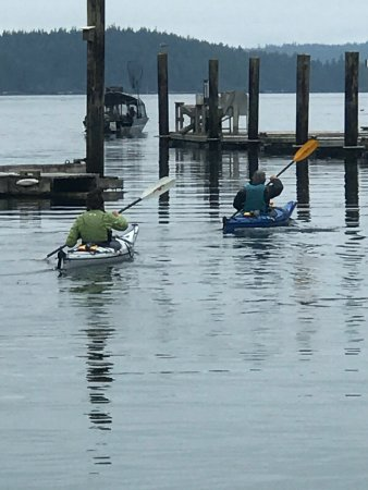 Telegraph Cove, Канада: From whale watching, kayaking with Orca's, Grizzly Bear Tours, bird watching, hiking or simply j