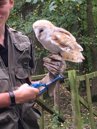 Oakham, UK: Paddy the Barn Owl.