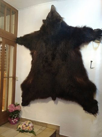 Gasthof zum Baren: Bear skin on wall!