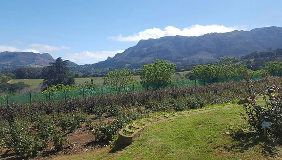 Cape Town Central, South Africa: View towards Constantia