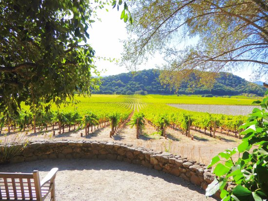 Stags' Leap Winery: View of the front vineyard
