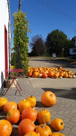 Saint Johns, MI: Pumpkins ready to pick up or go to the patch and choose your own.