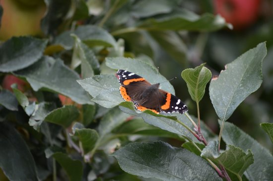 Cache Creek, Canada: Butterfly in the grove