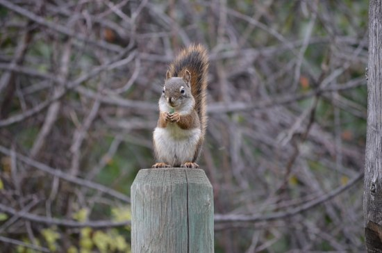 Cache Creek, Canada: Little squirrel came to visit