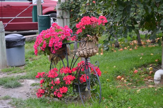 Cache Creek, Canada: Flowers everywhere add lovely color