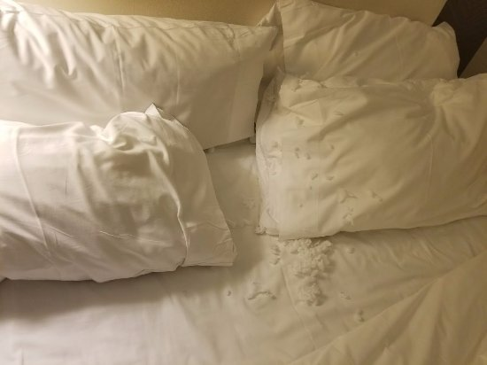Pillow Was Ripped And Stuffing Was All Over The Bed When I