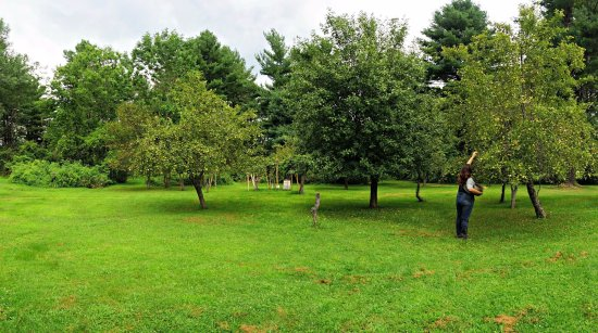 Claverack, Estado de Nueva York: The Mill at Green Hole's Orchard area