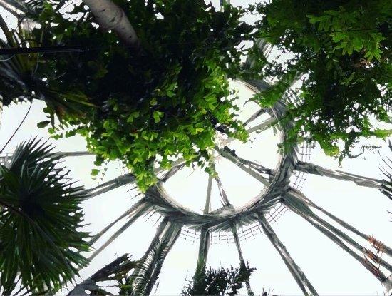 Botanical Gardens (Botanisk Have): photo2.jpg