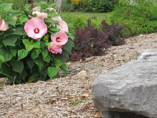 Orillia, Canada: Flowers in bloom