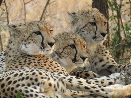 Phinda Private Game Reserve, Sydafrika: photo4.jpg