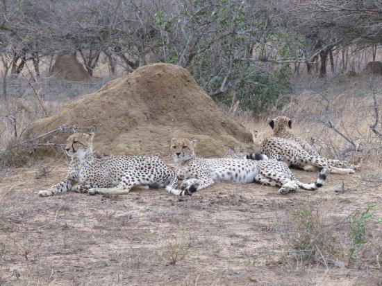 Phinda Private Game Reserve, Νότια Αφρική: photo5.jpg
