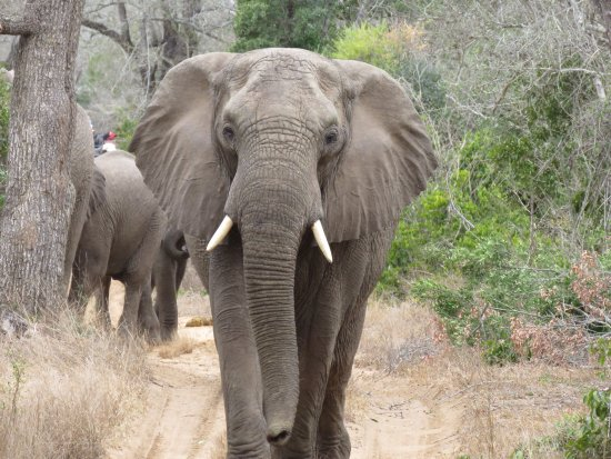 Phinda Private Game Reserve, South Africa: photo9.jpg