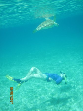 Caneel Bay, St. John: Turtles on every snorkel