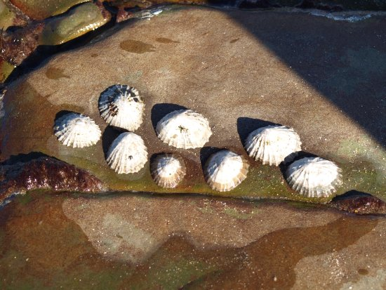 Miltown Malbay, İrlanda: shell creatures at the Spanish Point beech