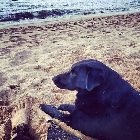 Greencastle, İrlanda: Dogs love Kinnagoe Bay