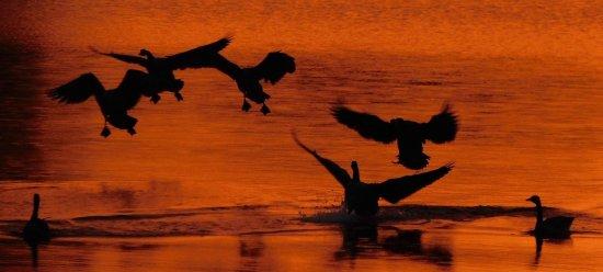 Inn at Pickwick Landing: Sunset on Pickwick Lake...