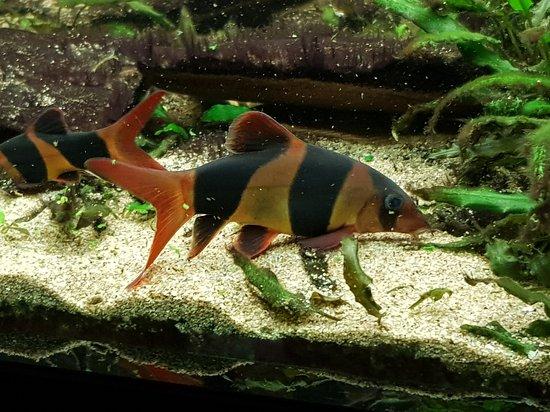 Public Aquarium Of Brussels Belgium Top Tips Before You
