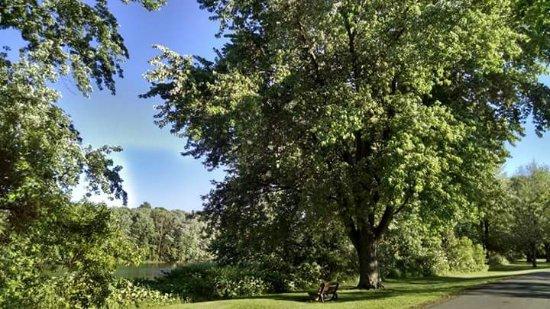 Foto de Otsiningo Park