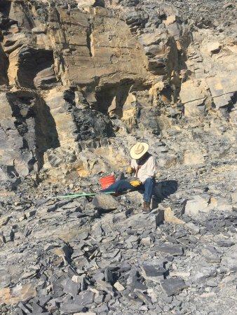 U-Dig Fossils: photo5.jpg