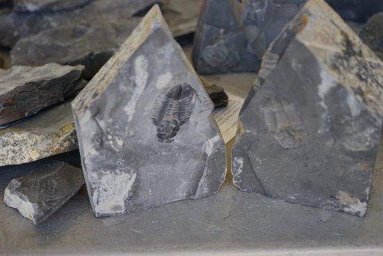U-Dig Fossils: photo7.jpg