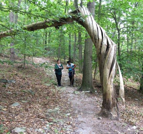 Dickerson, MD: Hurricane tree twist this tree.