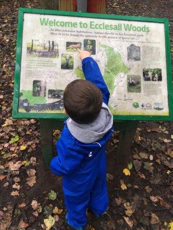 Ecclesall Woods: photo0.jpg