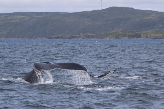 Northland Discovery Boat Tours: whales!!!