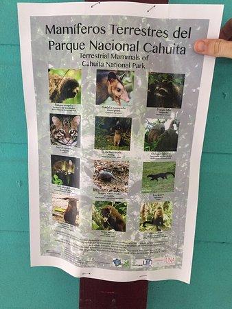 Cahuita, Kosta Rika: photo2.jpg