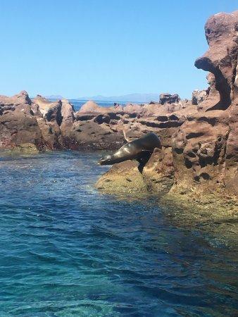 Isla Espiritu Santo: Lobos marinos