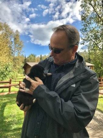 Wasilla, AK: Dog Sled Puppies you can interact with