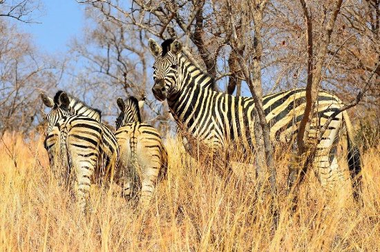 Vaalwater, South Africa: photo3.jpg