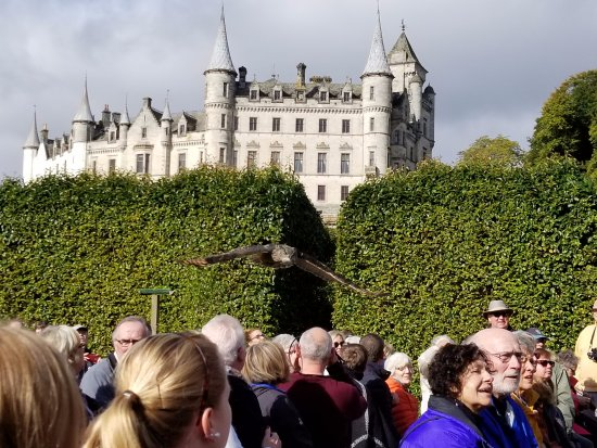 Invergordon, UK: Falcon demonstration at Dunrobin Castle