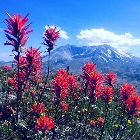 Cordilleran Tours