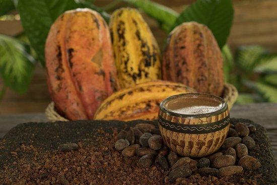 Tirimbina Biological Reserve: The best Chocolate Tour.