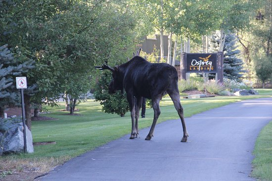 Wilson, WY: You do not have to walk very far to see wildlife.