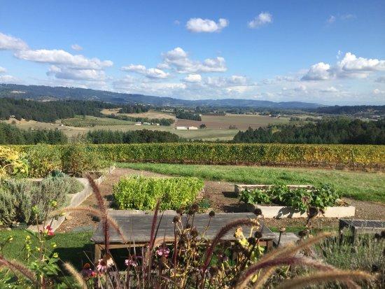 Penner-Ash Wine Cellars: Udsigt