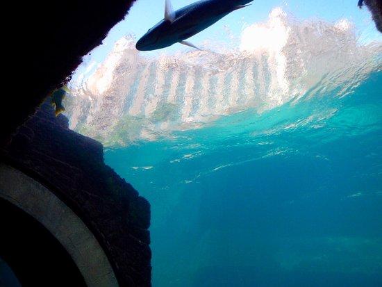 Marine Habitat at Atlantis: photo4.jpg