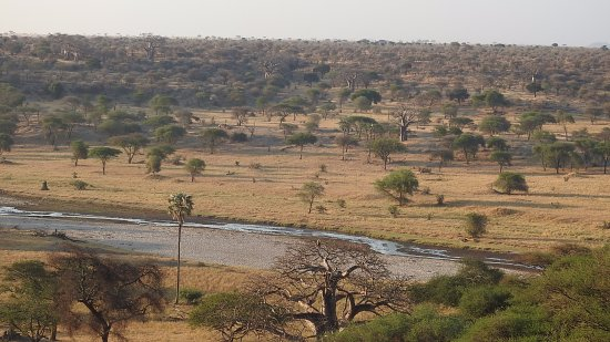 Tarangire Safari Lodge: This is the view of the Tarangire River. We could see it from the moment we walked out of our te