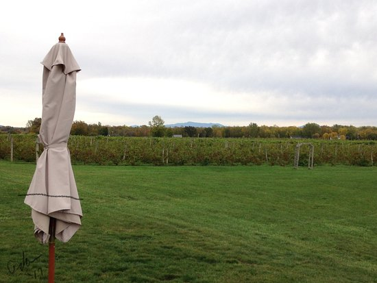 South Hero, VT: Autumn foliage and vines at Snow Farm Vineyard and Winery