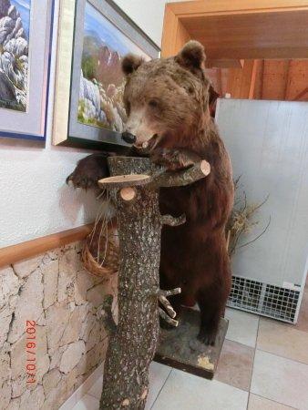 Korenica, Croatia: 店内の熊のはく製
