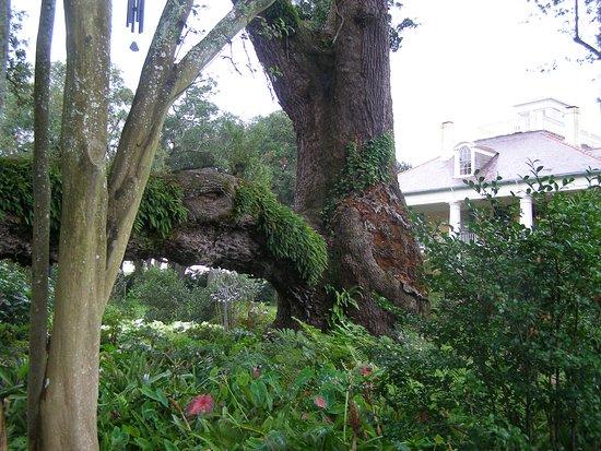Darrow, LA: Houmas House Plantation and Gardens