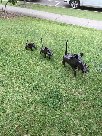 Eumundi, Australië: 3 little boars!
