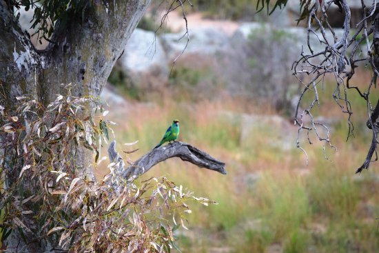 Mannum, Australien: bird life