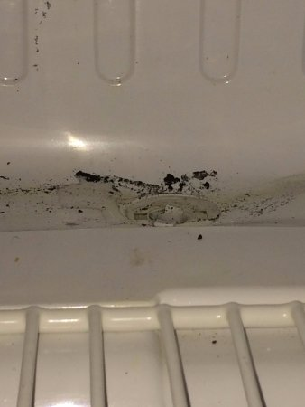 Clarion Hotel Palmer Inn: Mold in the frig!