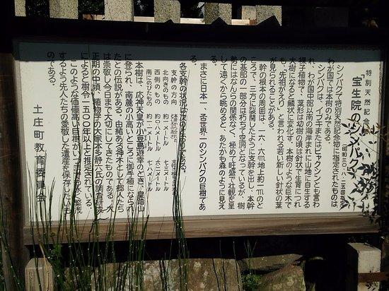 Tonosho-cho, Giappone: 真柏の説明案内板