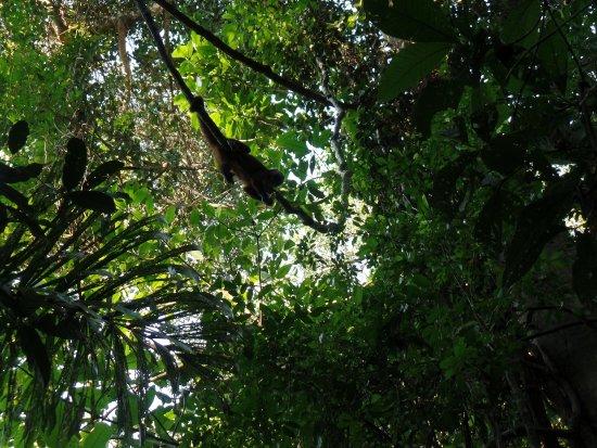 Ecoamazonia Lodge: Paseo a la isla de los monos