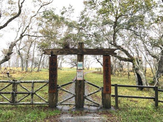 Ayamegahara张图片
