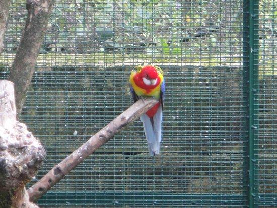 Castelnaud-la-Chapelle, France : Un oiseau exotique parmi les autres